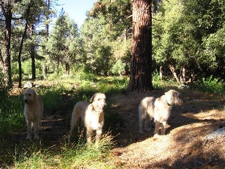 Pet Boarding & Dog Training  Deerhounds